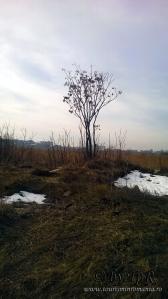 Parcul Natural Vacaresti