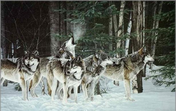 lupi-haite